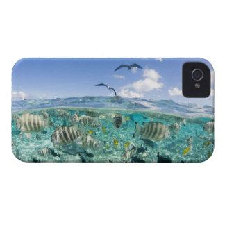 Lagoon safari trip featuring Stingrays iPhone 4 Case-Mate Case