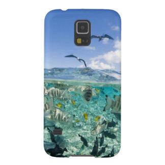 Lagoon safari trip featuring Stingrays Cases For Galaxy S5