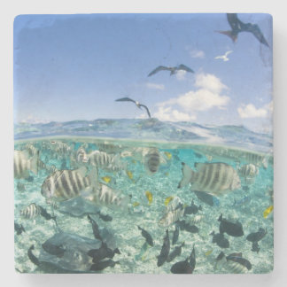Lagoon safari trip featuring Stingrays Stone Coaster
