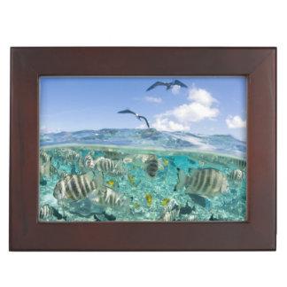 Lagoon safari trip featuring Stingrays Keepsake Box