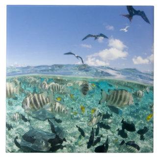 Lagoon safari trip featuring Stingrays Large Square Tile