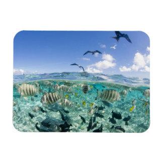 Lagoon safari trip featuring Stingrays Rectangular Photo Magnet