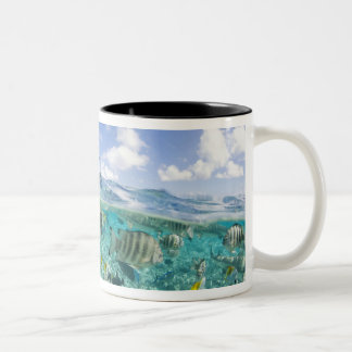 Lagoon safari trip featuring Stingrays Two-Tone Coffee Mug