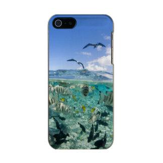 Lagoon safari trip featuring Stingrays Incipio Feather® Shine iPhone 5 Case