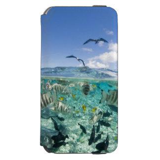 Lagoon safari trip featuring Stingrays Incipio Watson™ iPhone 6 Wallet Case