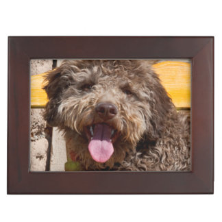 Lagotto Romagnolo Lying On A Wooden Bench Keepsake Box