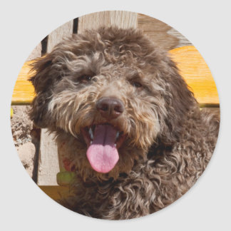 Lagotto Romagnolo Lying On A Wooden Bench Round Sticker