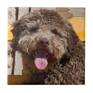Lagotto Romagnolo Lying On A Wooden Bench Small Square Tile