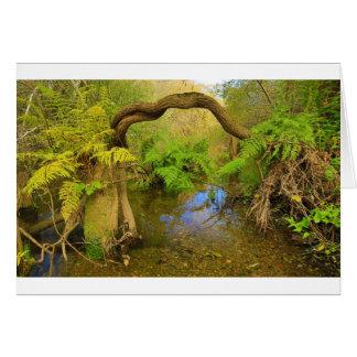 Lagunitas Creek Card