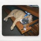 Laila sleeping on computer desk mousepad