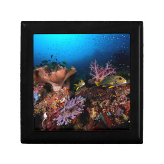 Laja Ampat Underwater Small Square Gift Box