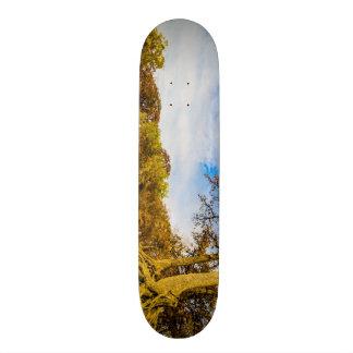Lake Dallas Landscape Skateboard Deck