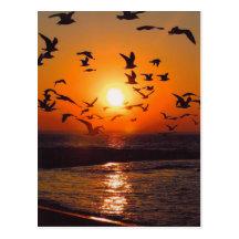 Lake Erie Sunset Postcard