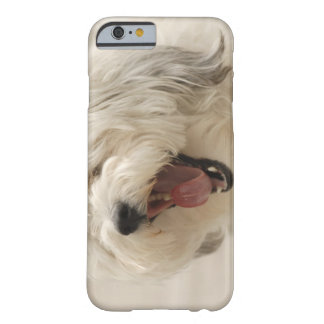 Lake of the Woods, Ontario, Canada Barely There iPhone 6 Case