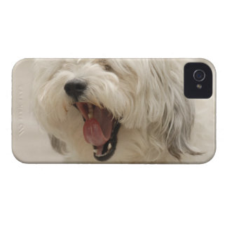Lake of the Woods, Ontario, Canada Case-Mate iPhone 4 Cases