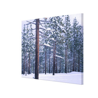 LAKE TAHOE STATE PARK, NEVADA. USA. Fresh snow Stretched Canvas Print
