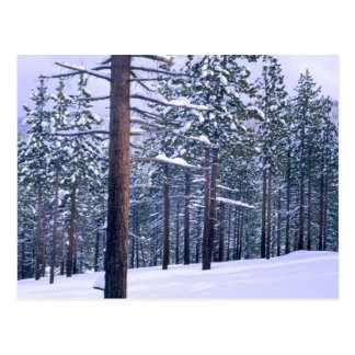 LAKE TAHOE STATE PARK, NEVADA. USA. Fresh snow Postcard