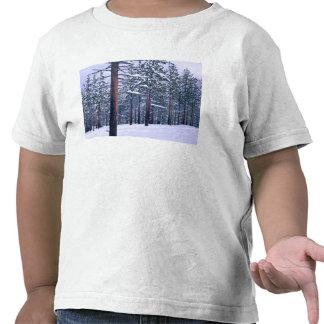 LAKE TAHOE STATE PARK, NEVADA. USA. Fresh snow T-shirts