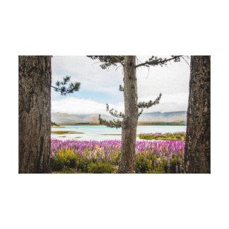 Lake Tekapo Lupins Canvas Print