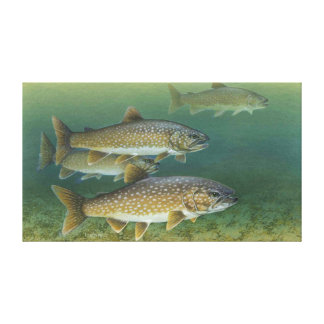 Lake Trout Painting Stretched Canvas Prints