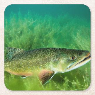 Lake Trout Portrait, Emerald Lake, Montana Square Paper Coaster