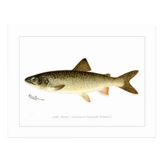 Lake Trout Post Card