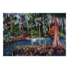 Lake Wales Florida Cypress Swamp and Boat Poster