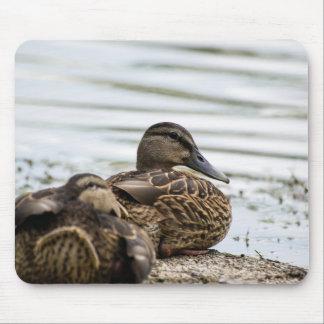 Lakeshore Ducks Mouse Mat