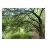 Lakeside Oak at Hilton Head Nature Preserve Greeting Cards