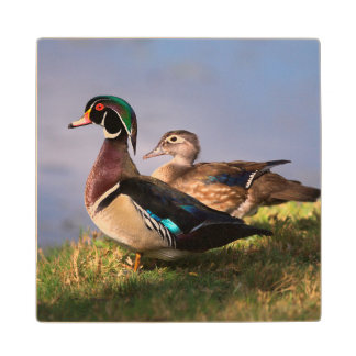 Lakeside, Wood Duck Wood Coaster