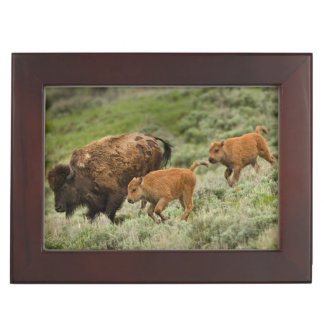 Lamar Valley Mini Stampede Keepsake Box