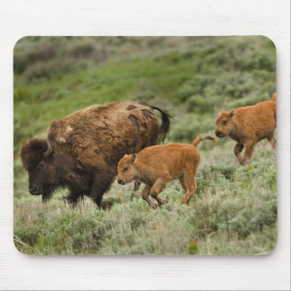 Lamar Valley Mini Stampede Mouse Pad