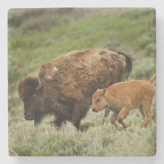 Lamar Valley Mini Stampede Stone Coaster