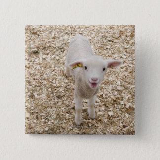 Lamb 15 Cm Square Badge