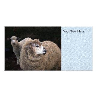 Lamb and Sheep Card