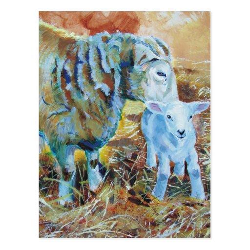 Lamb and sheep painting post card