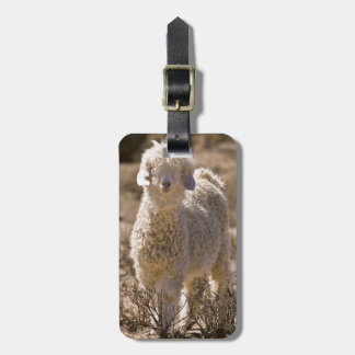 Lamb, Baviaans River Valley, Bedford Luggage Tag