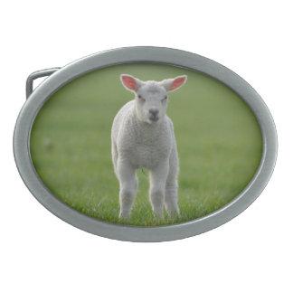lamb belt buckle