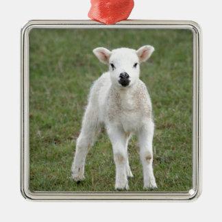 Lamb Christmas Ornament