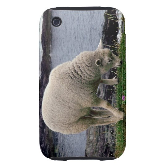 Lamb grazeing on wild remote south Devon coastline iPhone 3 Tough Covers