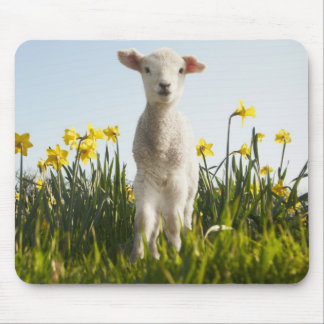 Lamb in a Field of Flowers Mouse Mat