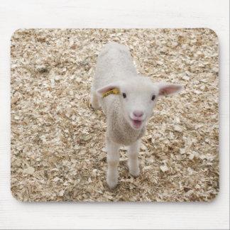 Lamb Mouse Mat