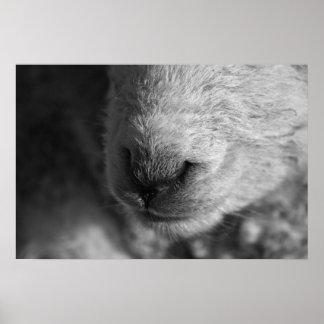 Lamb nose poster