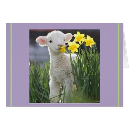 Lamb of Easter, no overrated bunnies Card