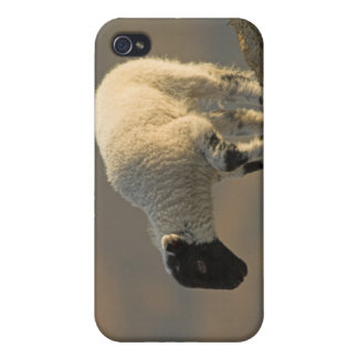 Lamb on a Hilltop iPhone 4 Case