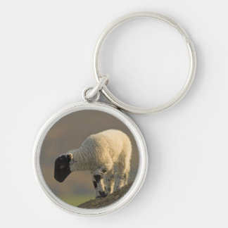 Lamb on a Hilltop Keychain/Keyring Key Ring