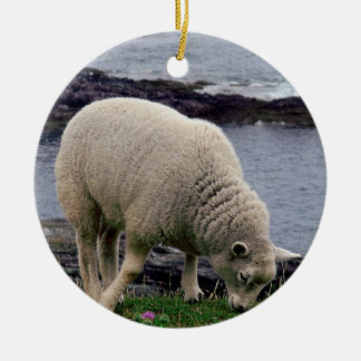 Lamb on remote wild south Devon coastline. Christmas Ornament