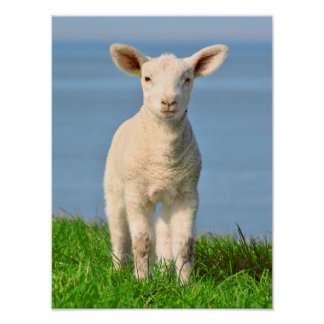 Lamb on the dyke poster