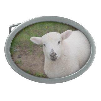 Lamb Oval Belt Buckles