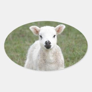 Lamb Oval Sticker